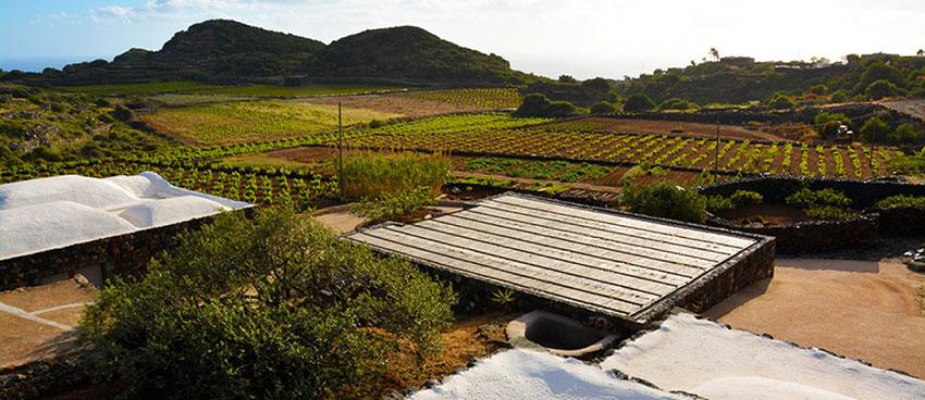 エマヌエラボノモ 畑